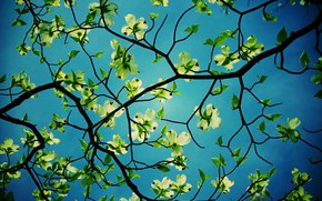 Picture the sky, leaves, branches, nature, tree