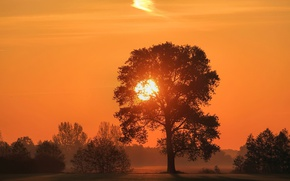 Wallpaper forest, the sky, the sun, trees, sunset, fog, glade, silhouettes
