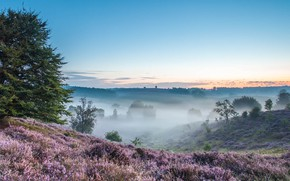 Picture trees, nature, fog, hills, field, morning, trees, field, nature, morning, fog, hills, heather, Heather