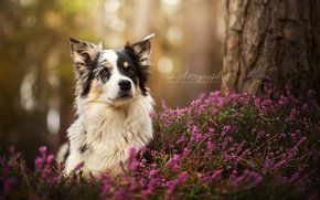 Wallpaper nature, look, dog