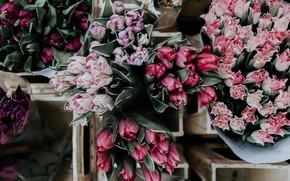 Picture flower, flowers, bouquet, tulips, flower, flowers, tulips, bouquet