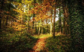 Picture autumn, forest, trees, path, Wales, Tongwynlais