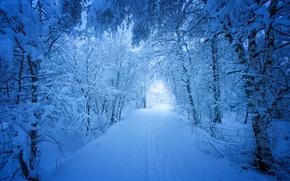 Wallpaper winter, Norway, snow, trees, road