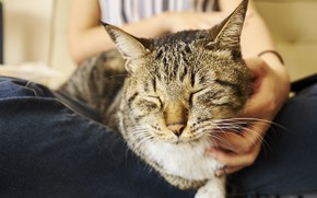 Picture tabby cat, he closed his eyes, bliss