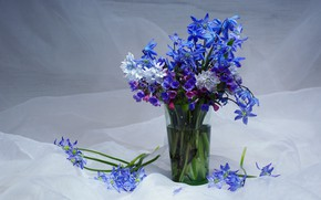 Wallpaper flowers, beauty, lungwort, bouquets, primroses, composition, a bunch, Puccinia, Scilla, may, spring, snowdrops