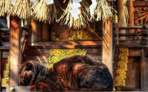 Picture cat, Japan, temple, sleep