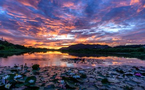 Picture the sky, clouds, sunset, lake, the evening, Lotus