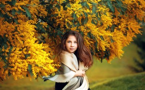 Picture girl, branches, tree, girl, brown hair, acacia, Mimosa, teen