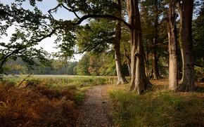 Wallpaper forest, autumn, grass, Netherlands, path, glade, trees, fog, s-Graveland