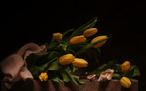 Wallpaper bouquet, tulips, still life, flowers