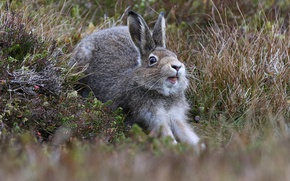 Picture grass, hare, potyagushki