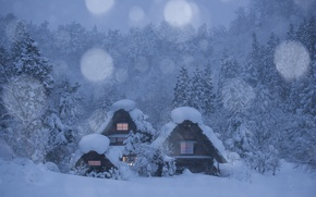 Wallpaper forest, Shirakawa, Shirakawa-go, village, Japan, trees, winter, snow, houses, Japan