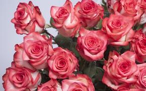 Wallpaper roses, Petals, buds, A Bouquet Of Roses