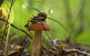 Picture mushroom, snail, boletus