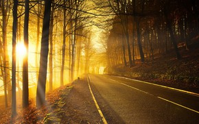 Picture road, forest, autumn, light, morning