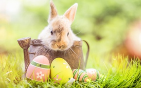 Wallpaper grass, decoration, bunny, Easter, Easter, happy, rabbit, the painted eggs, flowers, spring, eggs, flowers