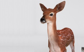 Picture deer, art, Hossein Diba, Fawn Deer