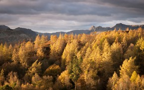 Picture autumn, trees, mountains