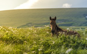 Picture grass, horse, meadow, foal