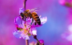 Picture flower, nature, bee, plant, insect