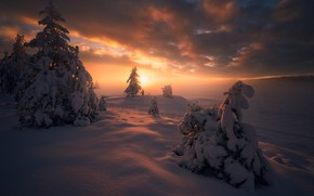 Picture winter, snow, trees, sunset, ate, Norway, the snow, Norway, RINGERIKE, Ringerike