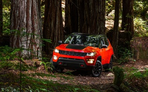 Picture car, red, forest, Compass, Jeep, vegetation, Jeep Compass