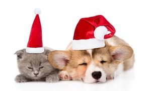 Wallpaper puppy, cat, kitty, kitty, sleep, cap, 2018, hat, New Year, sleep, New year, Christmas, dog