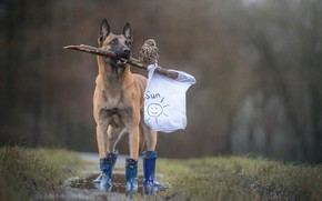 Wallpaper forest, animals, white, grass, rain, owl, bird, figure, dog, boots, Mike, puddle, flag, friendship, friends, ...