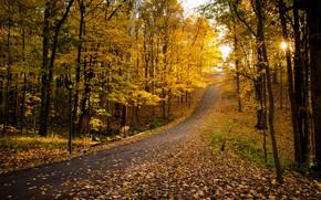 Picture road, autumn, Park, foliage