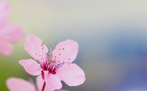 Wallpaper garden, flower, petals, spring