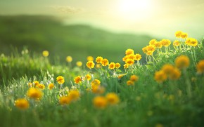 Wallpaper field, summer, landscape, flowers, nature, hills, summer, field, landscape, nature, flowers, hills