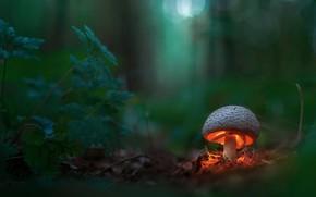 Wallpaper forest, mushroom, light, macro, bokeh