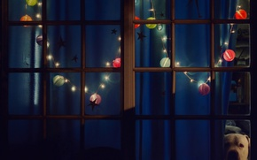 Wallpaper Christmas, window, new year, the evening, garland, lights, dog