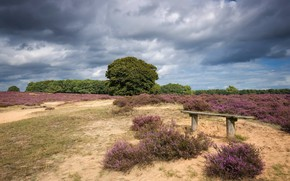 Picture field, landscape, bench