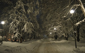 Picture Winter, Night, Trees, Snow, Lights, Frost, Winter, Night, Snow, Road, Trees