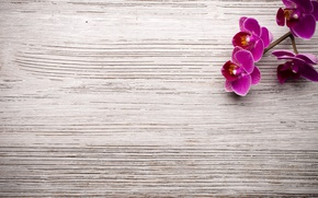 Picture wood, Orchid, flowers, orchid
