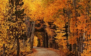 Wallpaper leaves, forest, autumn, road