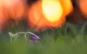 Wallpaper flower, nature, spring