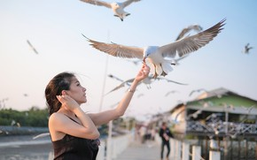 Picture girl, birds, face, the wind, hair, seagulls