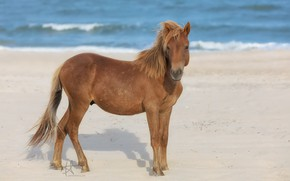 Picture animal, horse, animal, horse, handsome, handsome