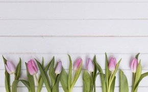 Picture flowers, tulips, pink, wood, tulips