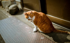 Picture cat, street, red