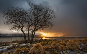 Picture sunset, tree, Norway, Norway, Nesna