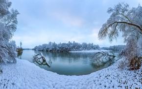 Wallpaper river, trees, winter, snow, the terek river, Stavropol Krai, Russia