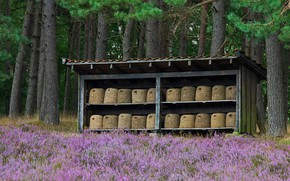 Picture forest, flowers, Germany, beehive, apiary, Luneburg