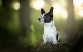 Picture dog, log, bokeh