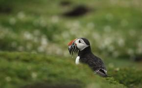 Picture bird, fish, stalled, catch