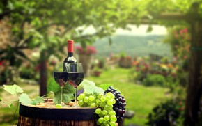 Wallpaper bottle, barrel, background, garden, wine, leaves, bokeh, greens, tube, glasses, grapes