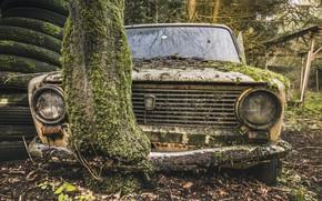 Picture tree, moss, scrap, Lada
