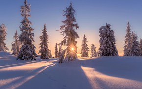 Picture winter, the sun, snow, trees, nature, home, the evening
